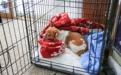 The Importance of Crate Training During the Holidays